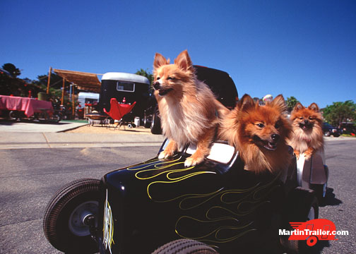 Pomeranians in a hot rod at a vintage trailer show. ©Martin Trailer